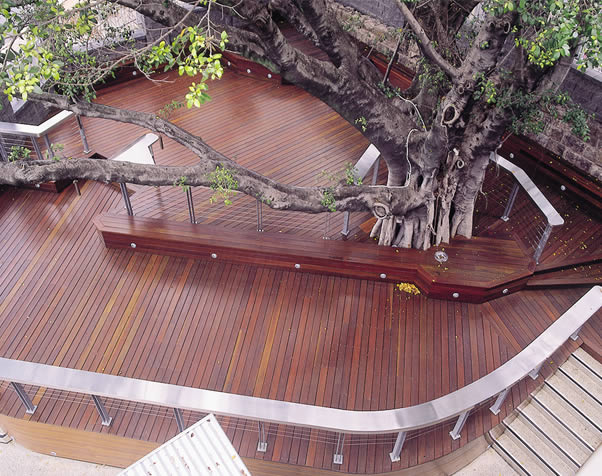 Large image of Select Grade spotted gum decking around a tree area at the Normanby Hotel Brisbane